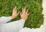 Сухой мох — уникальный материал для декора